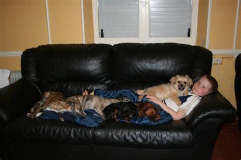 empecher un chien de monter sur le canapé comment empecher mon chien de monter sur le canape 28