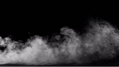 Smoke Palm