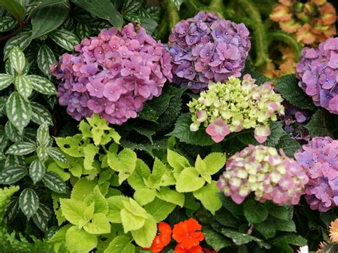 Blumengarten Bilder  Blumengarten Fotos Als Hintergrundbilder