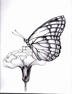 drawings of flowers and butterflies | my drawing of a ...