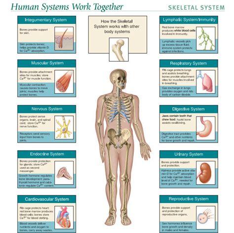 Brs Gross Anatomy 8th Edition Pdf Download Alneczeajumb