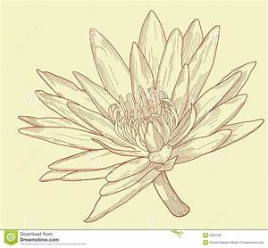 Water Lily Flower Drawings | Bouquet Idea