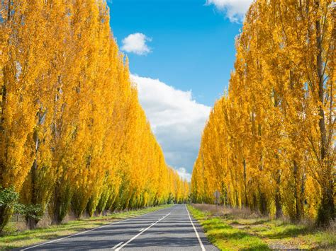 Where to See Autumn Leaves in Australia | Travel Insider