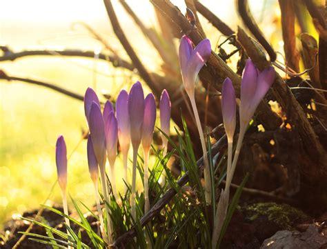 Der Garten Im Februar by Der Garten Im Februar Gartenbau M 228 Der