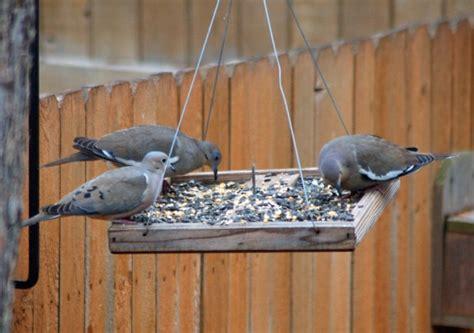 top 28 dove bird feeders bird feeders mourning dove