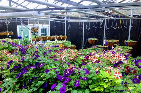 greenhouse amodio s garden center nursery flower shop