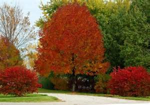 ash tree leaves fall color pictures reference