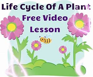 100 Best Plant Life Cycle      Images On Pinterest