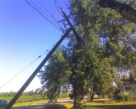 trees  power  safety