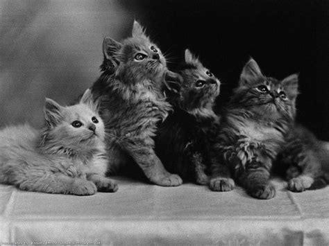sous de bureau pas cher fonds d 39 écran chats