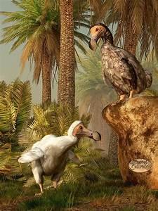 Dodo Hide N Seek | Madagascar, Mauritius and Daniel o'connell