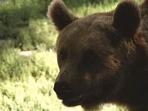 Und Der Bär : welt der fabeln der wolf und der b r ~ Orissabook.com Haus und Dekorationen