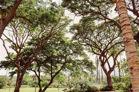 Free Images  Forest, Branch, Sun, Leaf, Flower, Summer