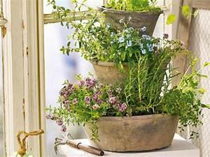 Kräutergarten In Der Wohnung : kr utergarten ~ Watch28wear.com Haus und Dekorationen