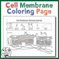 Cell Membrane Coloring Activity Help Students Identify Key Structures  Cell Membrane, Students