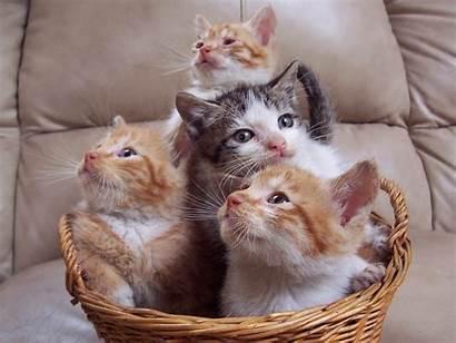 Cat Wallpapers Cats Desktop Lovable Amazing Loveable