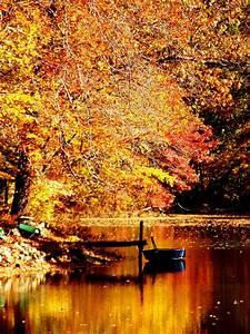 fall foliage on Tumblr