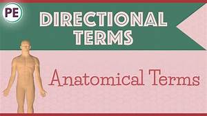 Anatomical Terms  Directional Terms  Anatomy