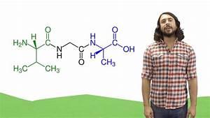 Biomolecules  U0026 Protein Structure