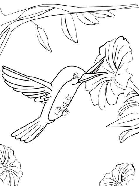 Coloring Pages Of Hummingbirds Hummingbird Coloring Pages And Print Hummingbird