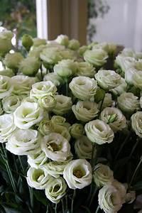 Bouquet Fleurs Blanches : 105 best images about fleurs blanches on pinterest ~ Premium-room.com Idées de Décoration