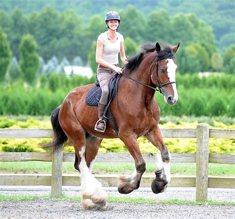 Get on your high horse: Ride a Clydesdale - nj.com