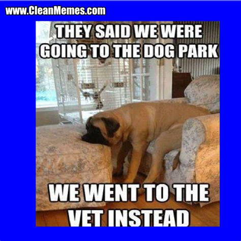 Clean Animal Memes - pics for gt funny clean animal memes