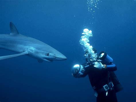 conduite 224 tenir lors d une rencontre avec un requins