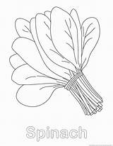 Spinach Coloring Pages Designlooter 123coloringpages Vegetable 930px 99kb sketch template