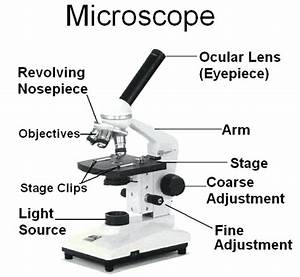 Microscope Parts Sketch At Paintingvalley Com