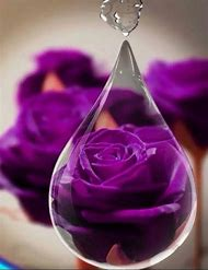 Purple Rose with Water