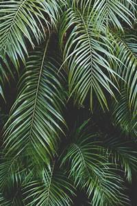palm tree leaf | Tumblr