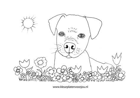 Kleurplaat Mandala Hondje by Kleurplaat Hondje Tussen De Bloemen Kleurplaten Voor Jou