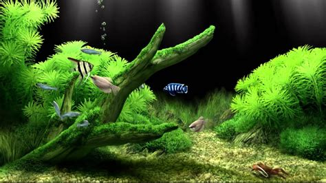 dream aquarium virtual fishtank  youtube