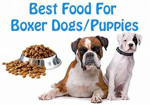 dog lovers know the best dog foods for boxer breed dogs With best dog food for boxers