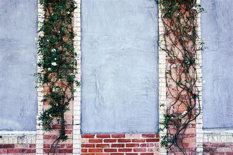 green outdoor plants  brown brick wall  stock photo