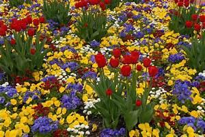 Bilder Blumen Kostenlos Downloaden : kostenlose blumenbilder ~ Frokenaadalensverden.com Haus und Dekorationen
