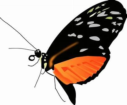Butterfly Orange Transparent Lighter Clip Butterflies Pluspng