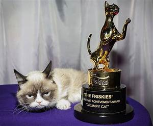 Grumpy Cat Wins Lifetime Achievement Award at The Friskies ...