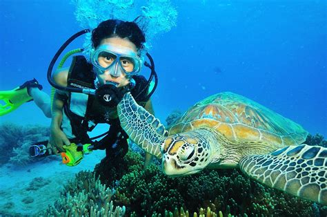 diving  great barrier reef  cairns