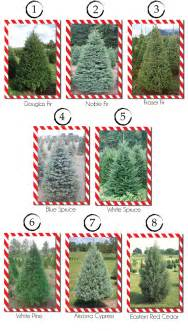 Best Type Of Christmas Tree For Allergies washington home journal