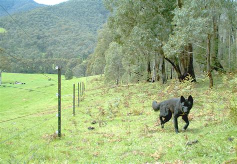 electric fencing underutilised  wild dog fight industry