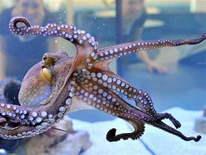 This, Octopus, Is, Now, An, Official, Photographer, At, An, Nz, Aquarium, These, Are, Some, Of, Her, Clicks
