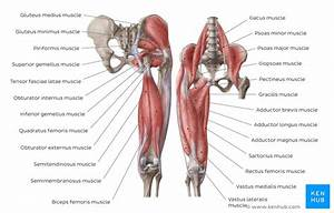 Lower Extremity Anatomy  Bones  Muscles  Nerves  Vessels
