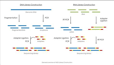 Next Sequencing Illumina Next Generation Sequencing Whole Genome Sequencing