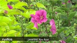 Arbuste Plein Soleil Longue Floraison : les plus beaux arbustes fleurs d 39 t youtube ~ Premium-room.com Idées de Décoration