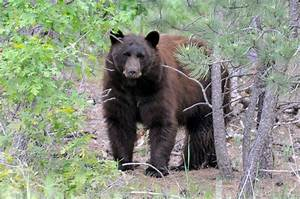 Spring safety: Be aware of the bears - United States Air ...