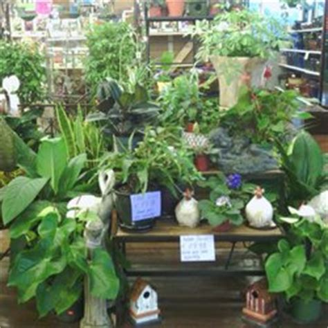 mayo garden center mayo garden centers 14 photos nurseries gardening