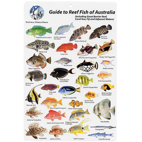 australia fiji fish id card