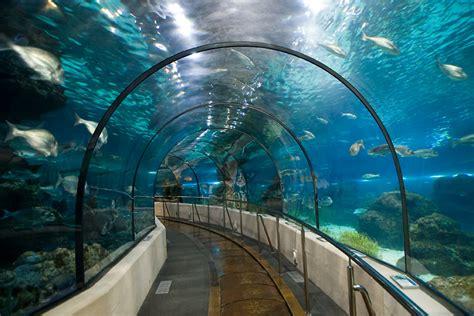 acuario de barcelona descubre l aqu 224 rium de barcelona